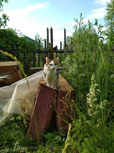 домашняя кошка на дикой даче