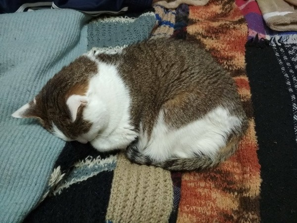 кошачьи сны1