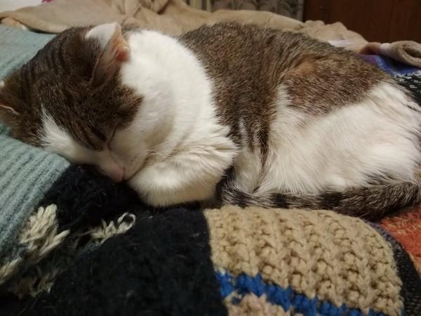 кошачьи сны2