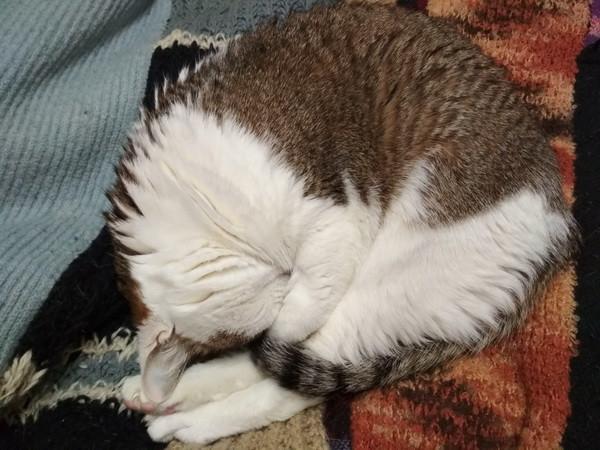 кошачьи сны3