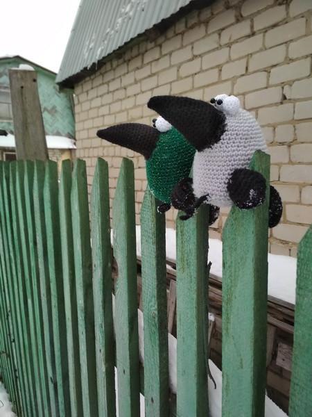 вороны на заборе