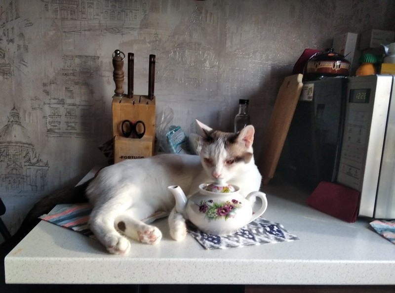 кошка и чайник3