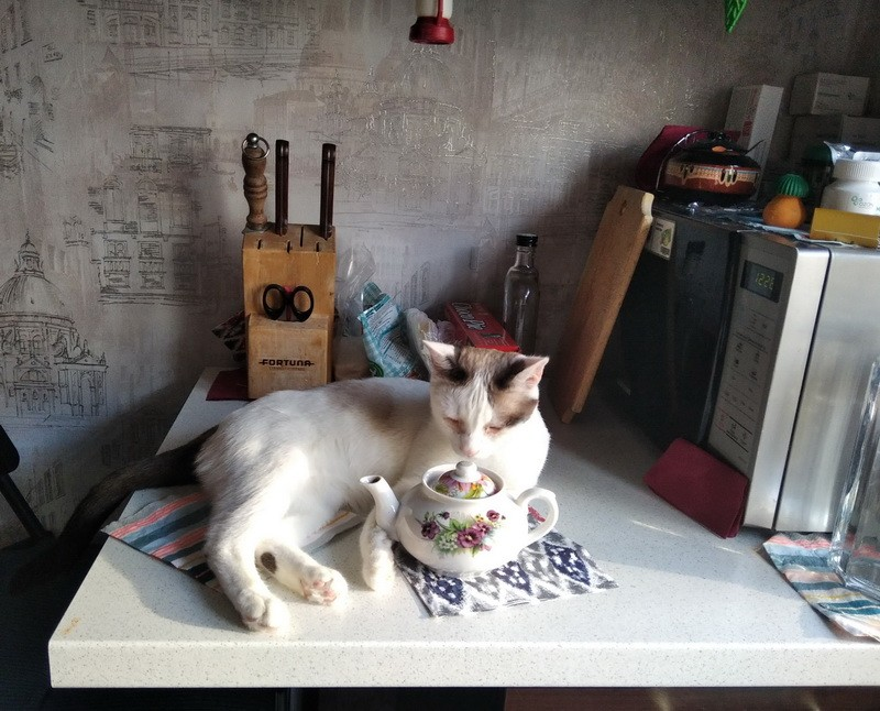 кошка и чайник2