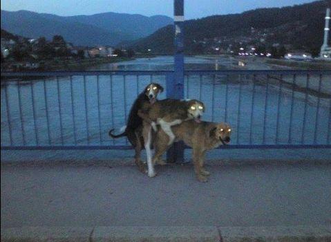 СобакиШувалова
