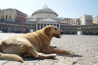И такой он получается в Неаполе.
