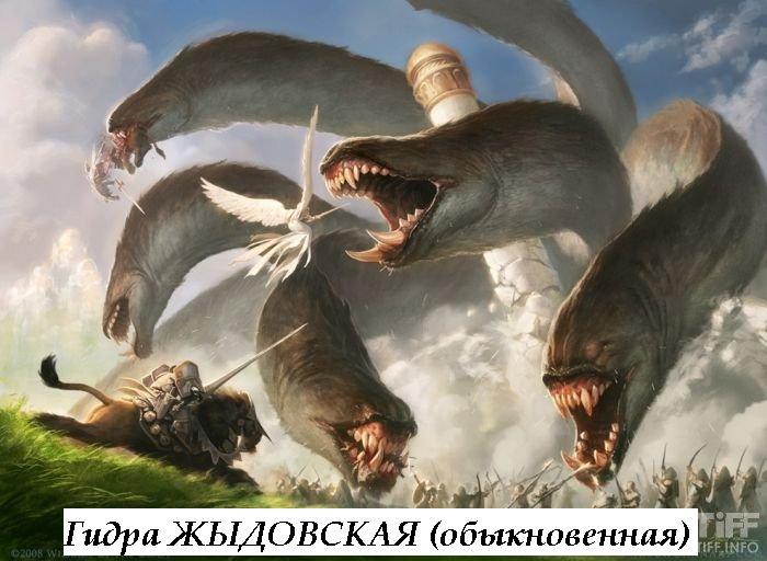 гидра жыдовская (обыкновеная)...