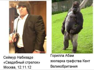 Интеллект гориллы