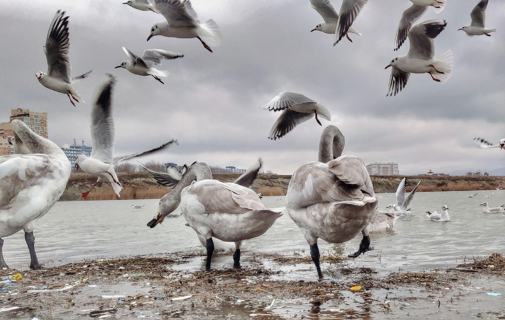 Суджукская лагуна, Новороссийск. 31 января 2021. Фото: Саша Савичева