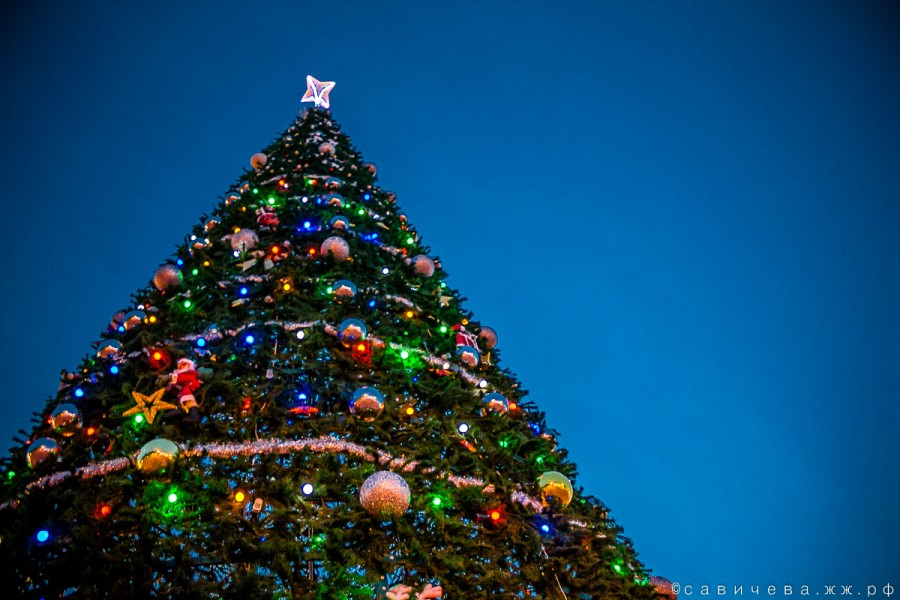 Главная елка Геленджика