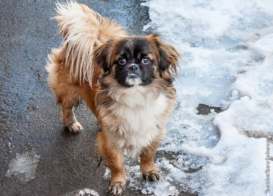 Собака в Ростове-на-Дону