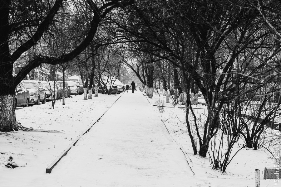 snow. Sasha Savicheva photography