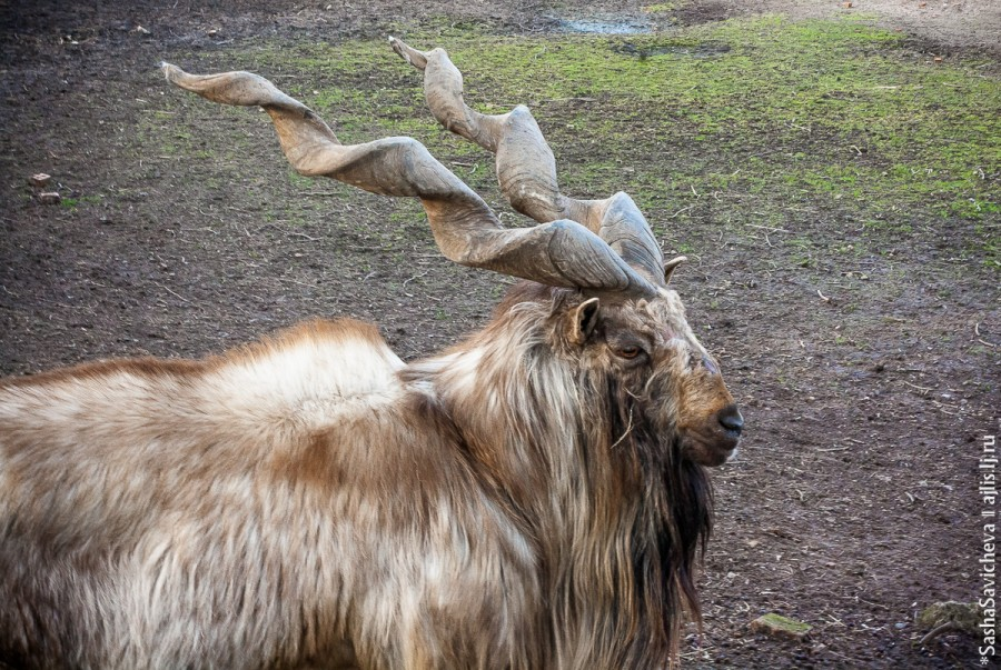 Ростовский зоопарк