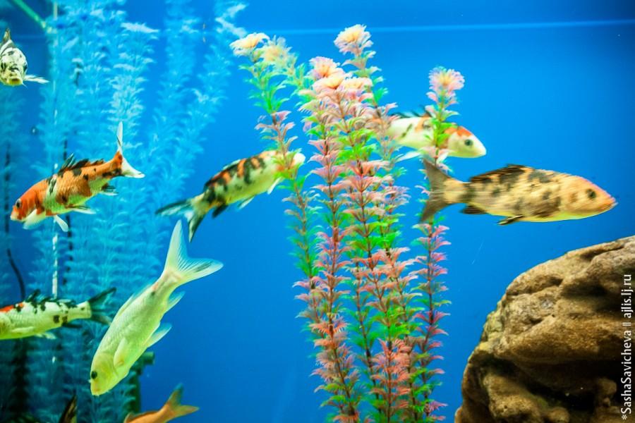 Ростовский зоопарк. Рыбы