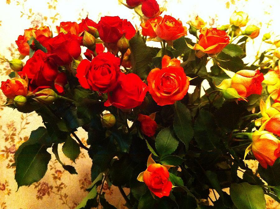 Любимые цветы ajlis