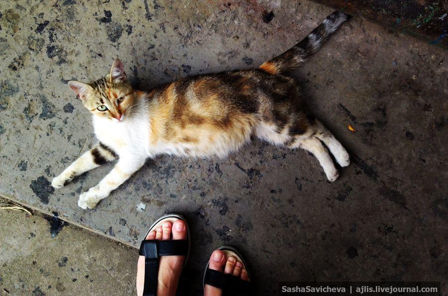 Всем субботнего котика
