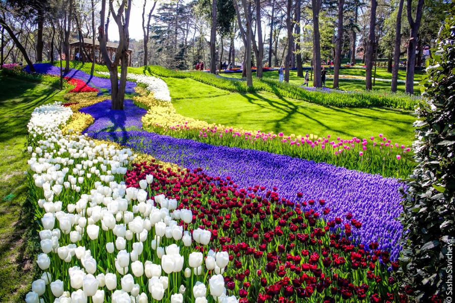 Парк Эмирган в Стамбуле и Фестиваль тюльпанов