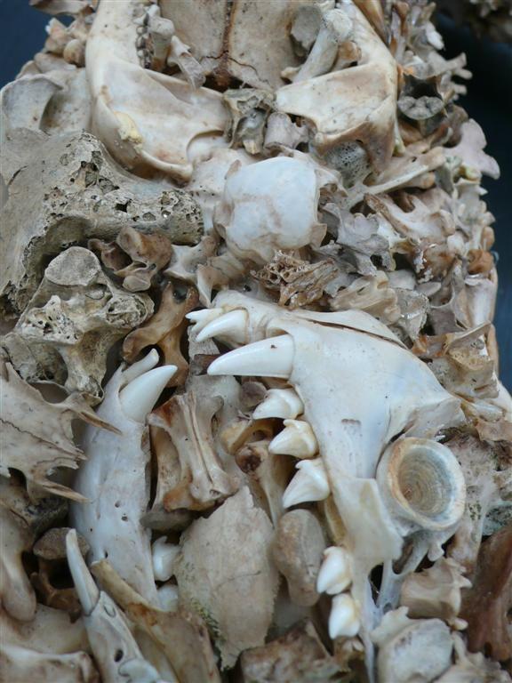 bones_ak47_02