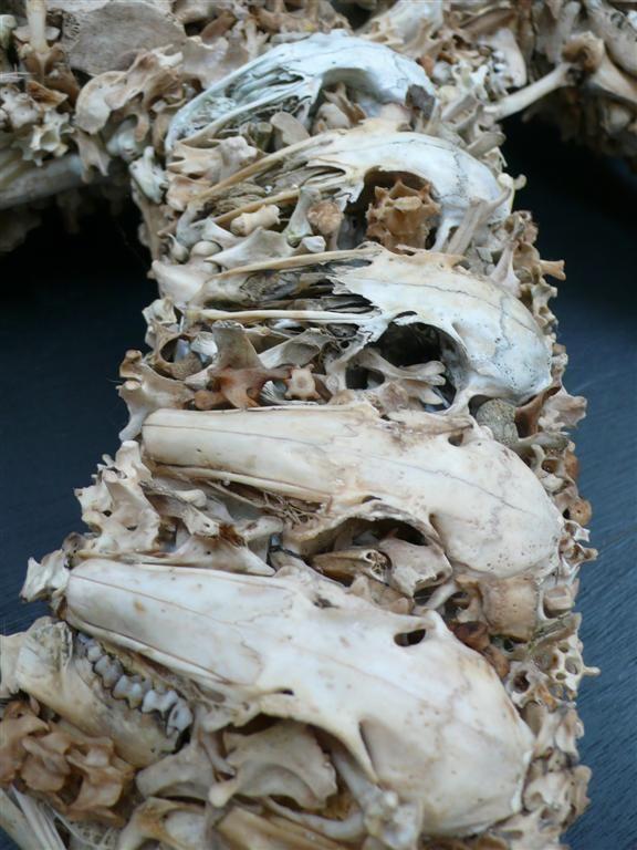 bones_ak47_03