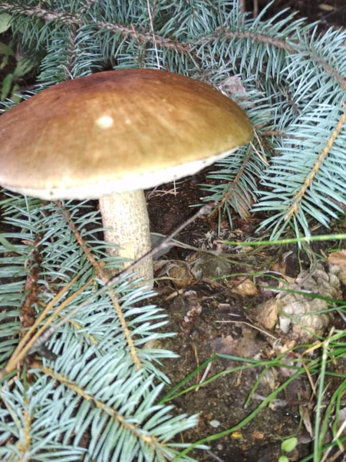 Внезапные грибы