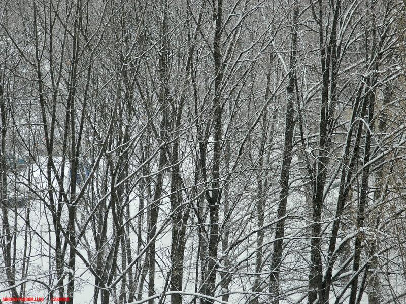 Снегопад 24 марта, Харьков