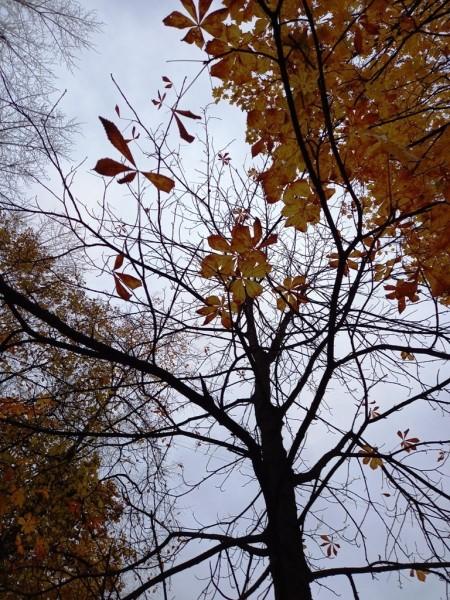 Осенняя графика 2