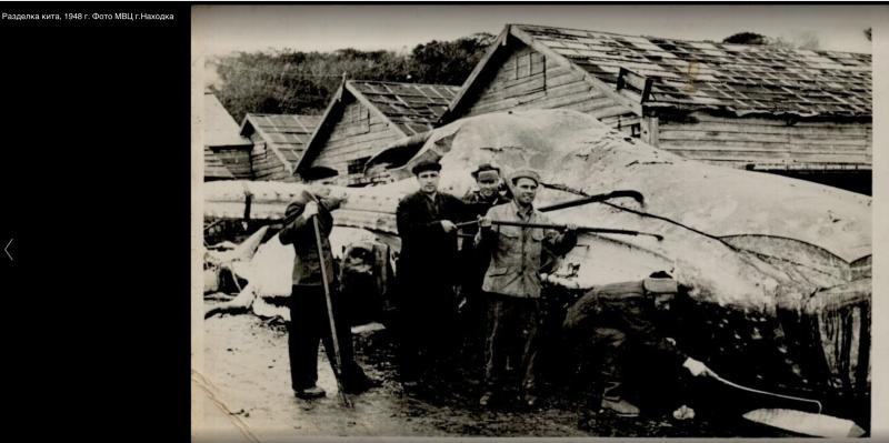 Разделка кита 1948 год. г.Находка