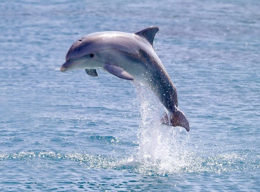 delfiny-krasivye-kartinki-16-1.jpg