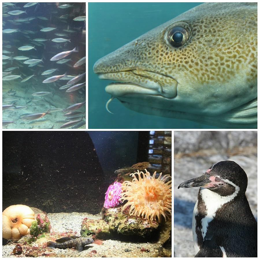 1 атлантический парк, Норвегия, блогтур, путешествия, фотография, Алесунд, животные, рыбы, пингвин, aksanova.livejournal.com, ЖЖ,