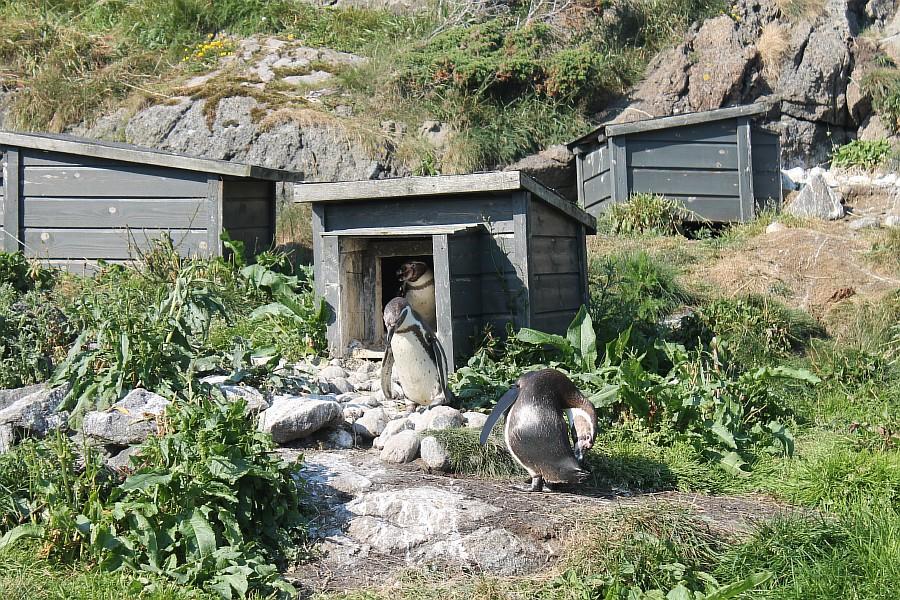 2 атлантический парк, Норвегия, блогтур, путешествия, фотография, Алесунд, животные, рыбы, пингвин, aksanova.livejournal.com, ЖЖ,