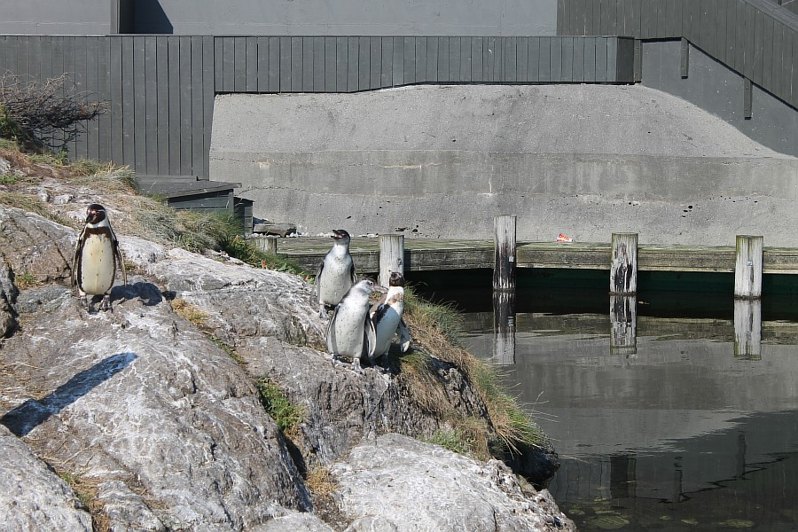 5 атлантический парк, Норвегия, блогтур, путешествия, фотография, Алесунд, животные, рыбы, пингвин, aksanova.livejournal.com, ЖЖ,