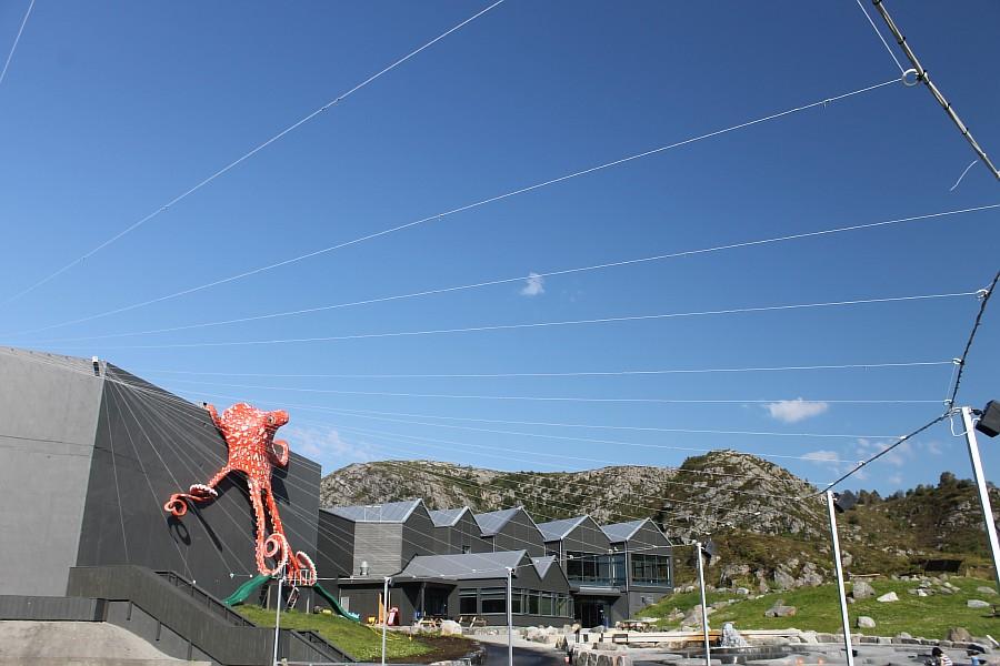 6 атлантический парк, Норвегия, блогтур, путешествия, фотография, Алесунд, животные, рыбы, пингвин, aksanova.livejournal.com, ЖЖ,