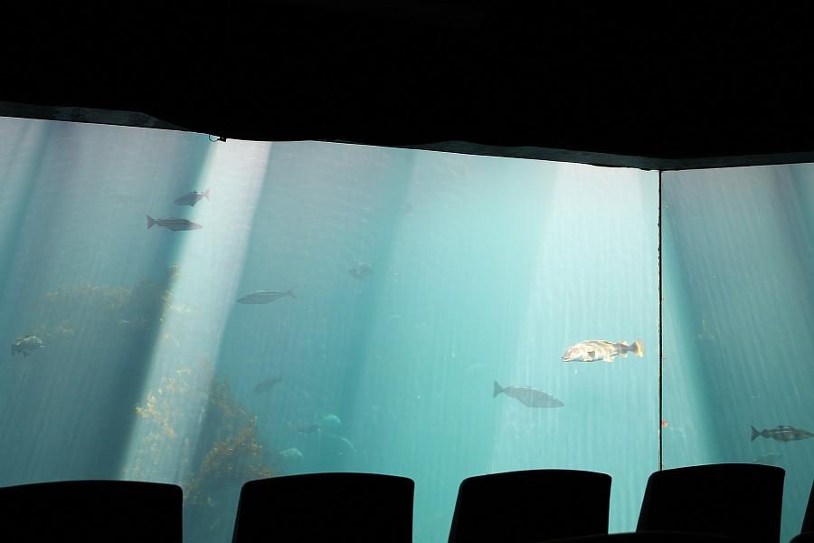 17 атлантический парк, Норвегия, блогтур, путешествия, фотография, Алесунд, животные, рыбы, пингвин, aksanova.livejournal.com, ЖЖ,