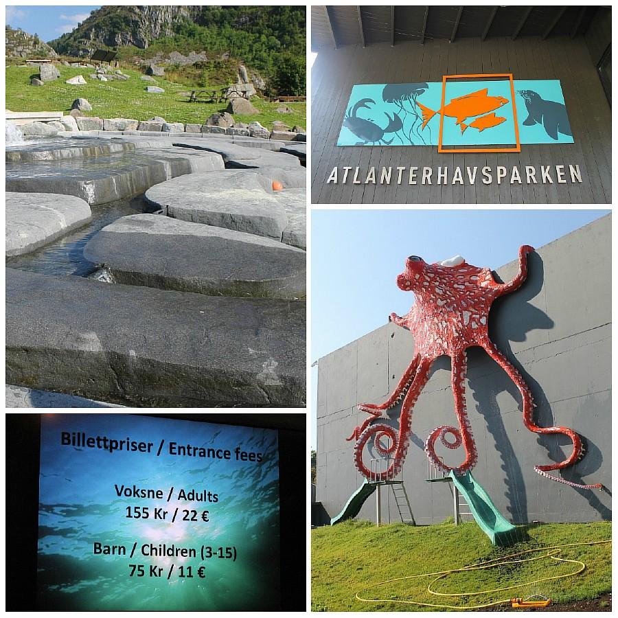 23 атлантический парк, Норвегия, блогтур, путешествия, фотография, Алесунд, животные, рыбы, пингвин, aksanova.livejournal.com, ЖЖ,
