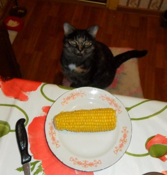 кукуруза 1