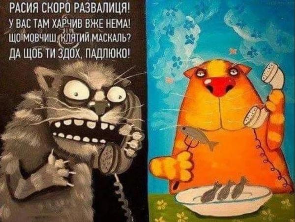Коты)