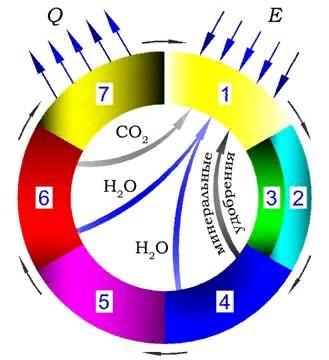 Рисунок 7.1 – Схема круговорота основных веществ в цикле