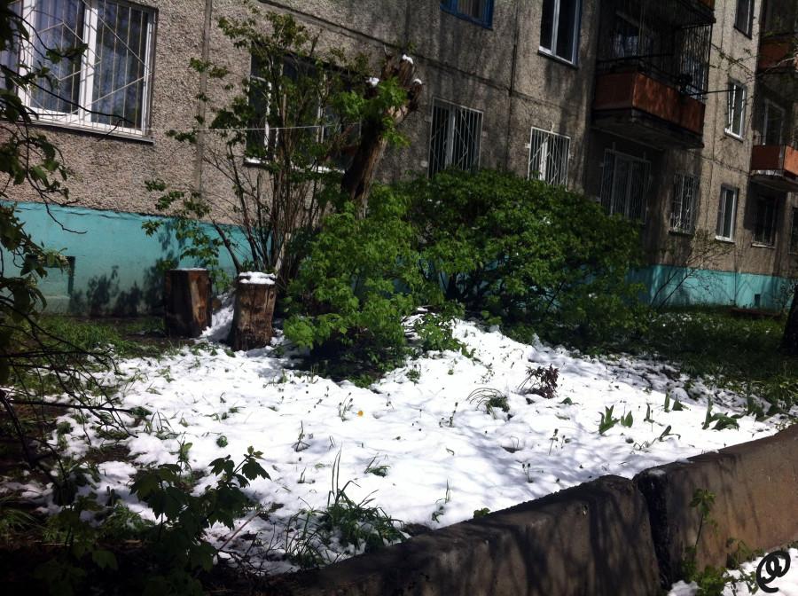 Снег 11 мая4