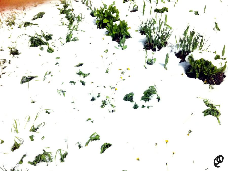 Снег 11 мая2