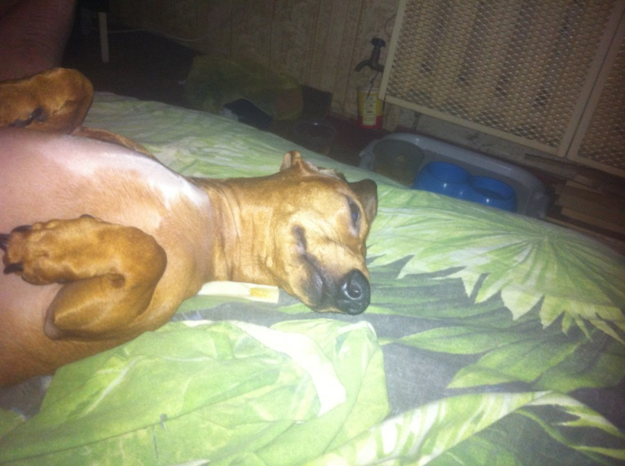Арья спит