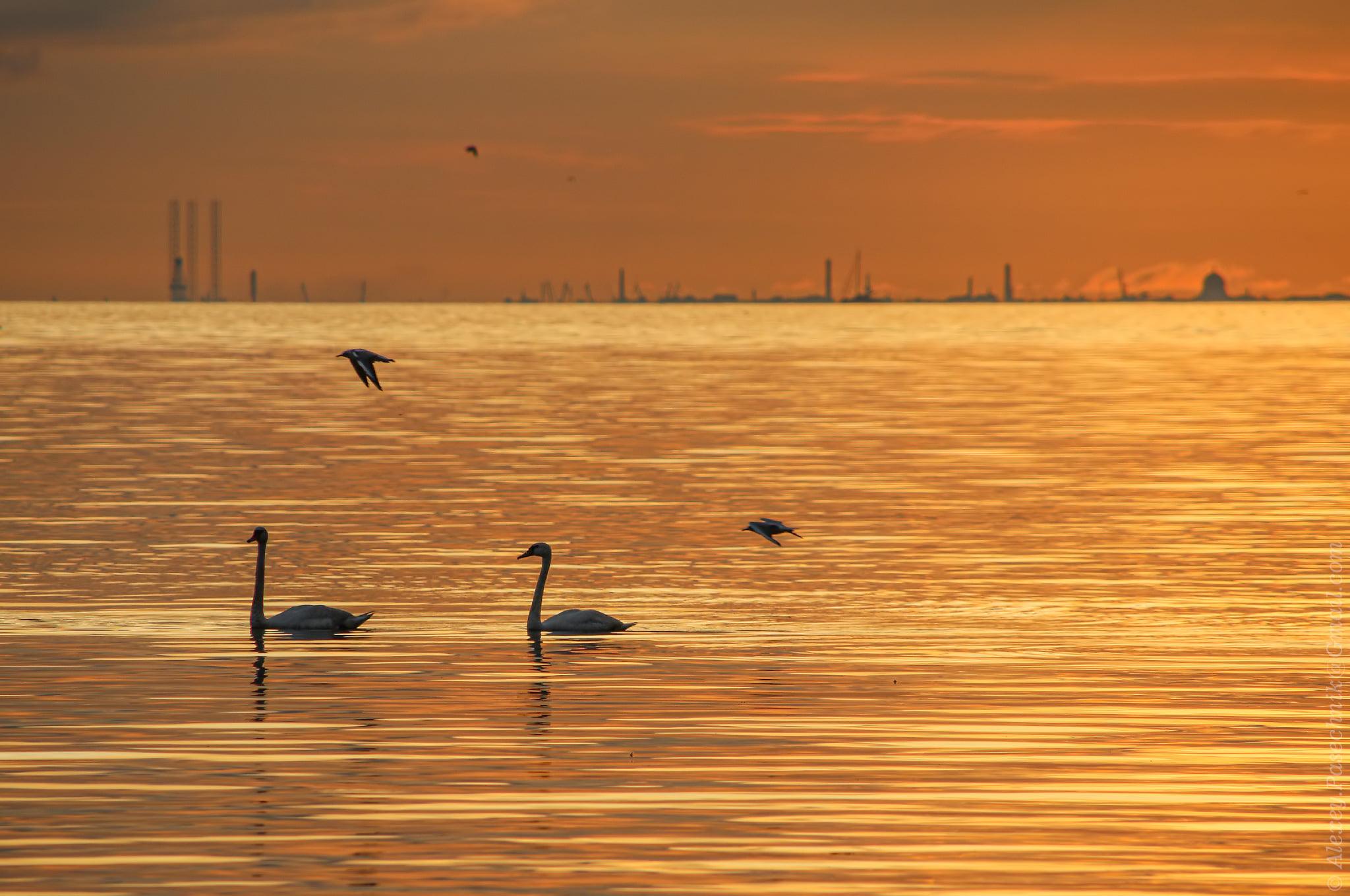 Канонерский остров; Санкт-Петербург. 8 августа 2021 года