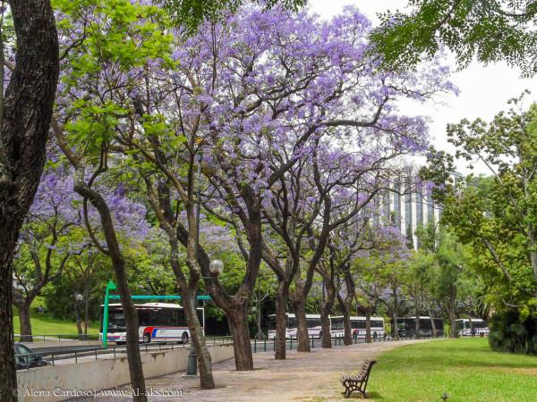 Árvores do Parque Eduardo VII