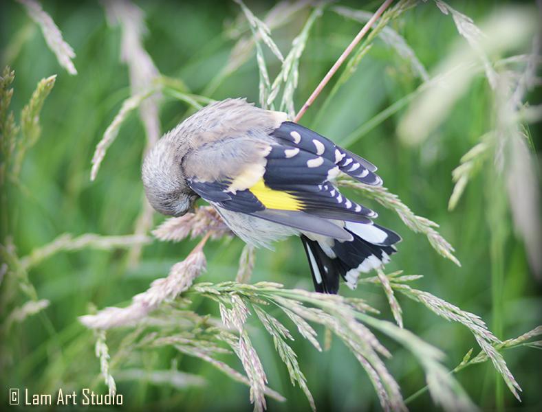 ptica3