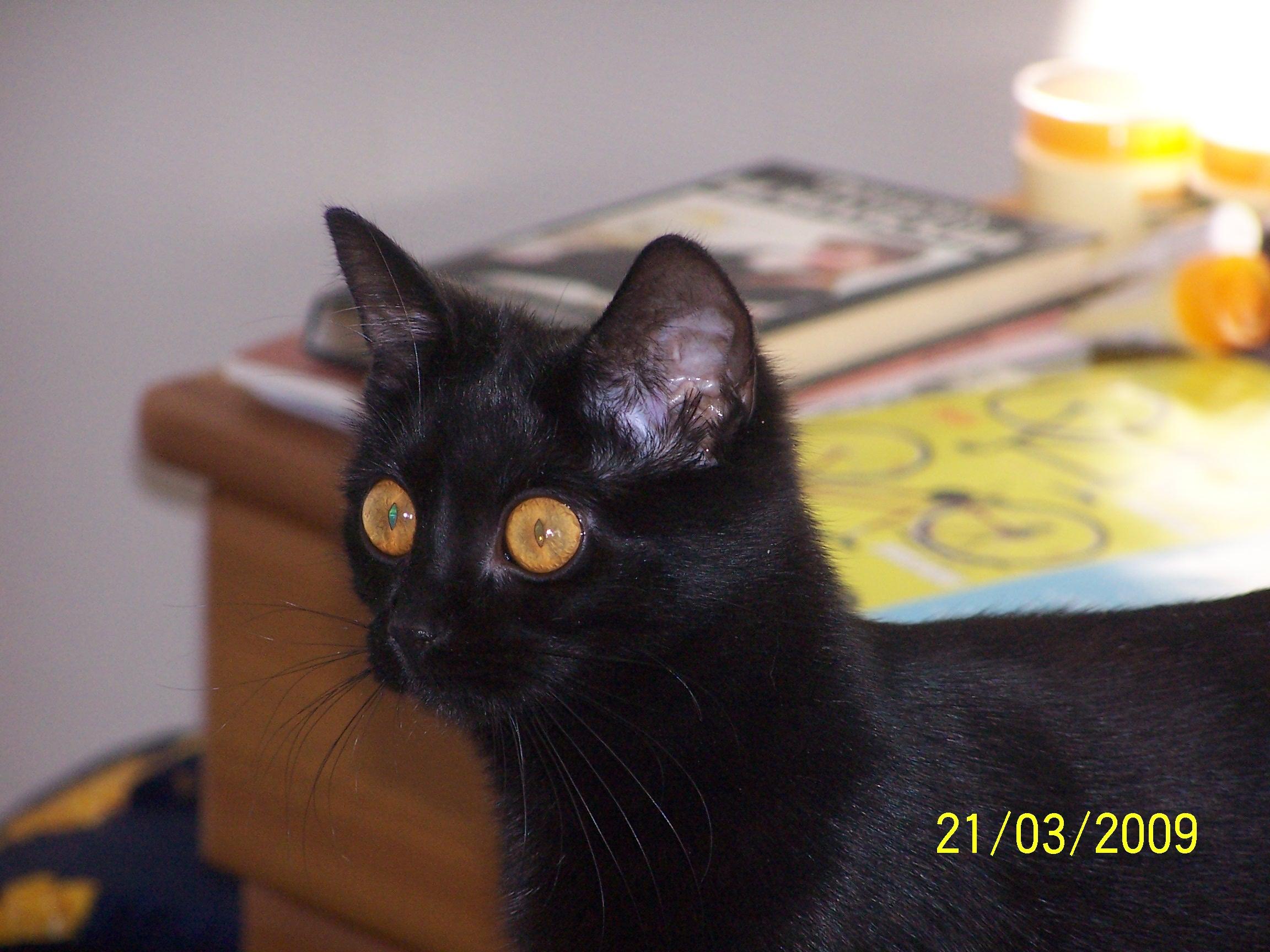 mars2009_2 013
