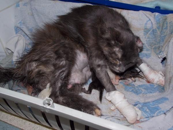Только что рожденные котята не сосут молоко