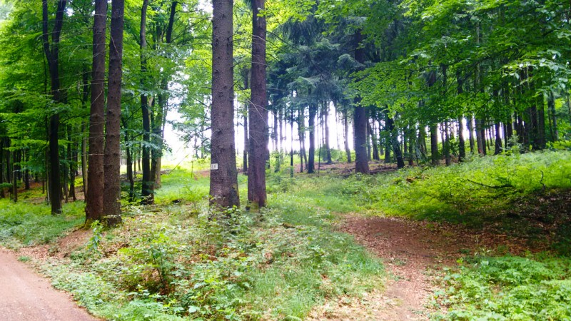 Тропинки в лесопарке