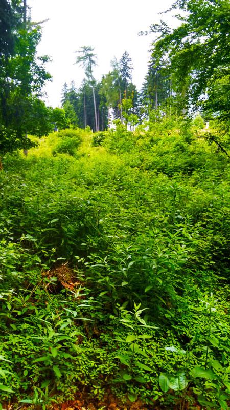 Буйная растительность