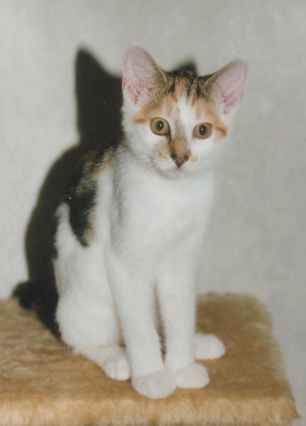 Кошка Лися подросток