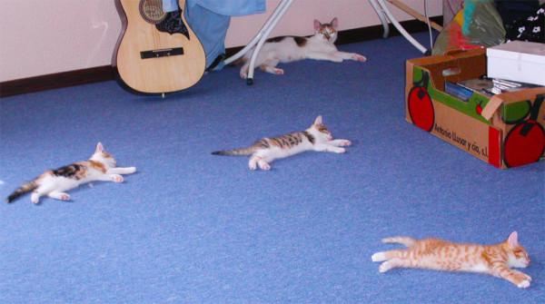 Разбросанные кошки
