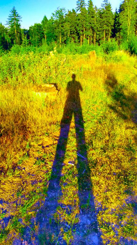 Закатные тени в лесу