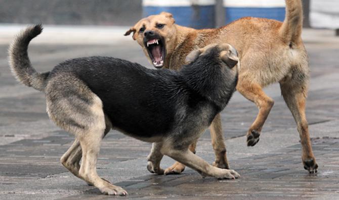 Картинки по запросу бродячии собаки